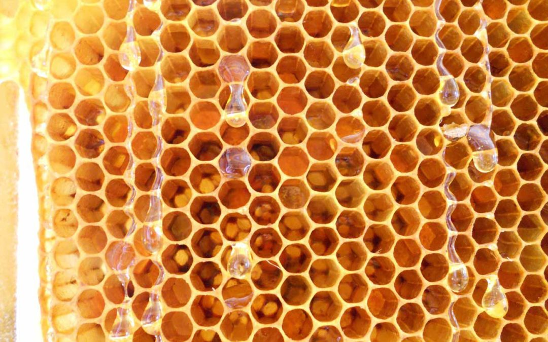 Beekeeping Class First Step to Harvesting Royal Jelly and Bee Pollen